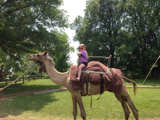 Oh my goodness!  Camel rides are now offered at Grant's Farm for an additional $5.00 per person.