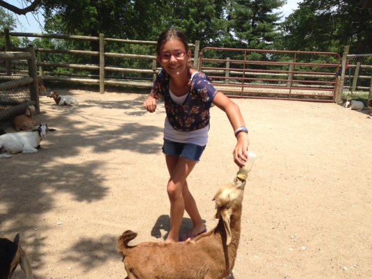 Feeding the baby goats is fun.  However, watch out - some goats do get a little aggressive.