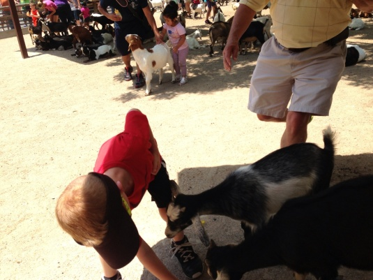 Jackson suddenly leaned down to help a smaller goat.
